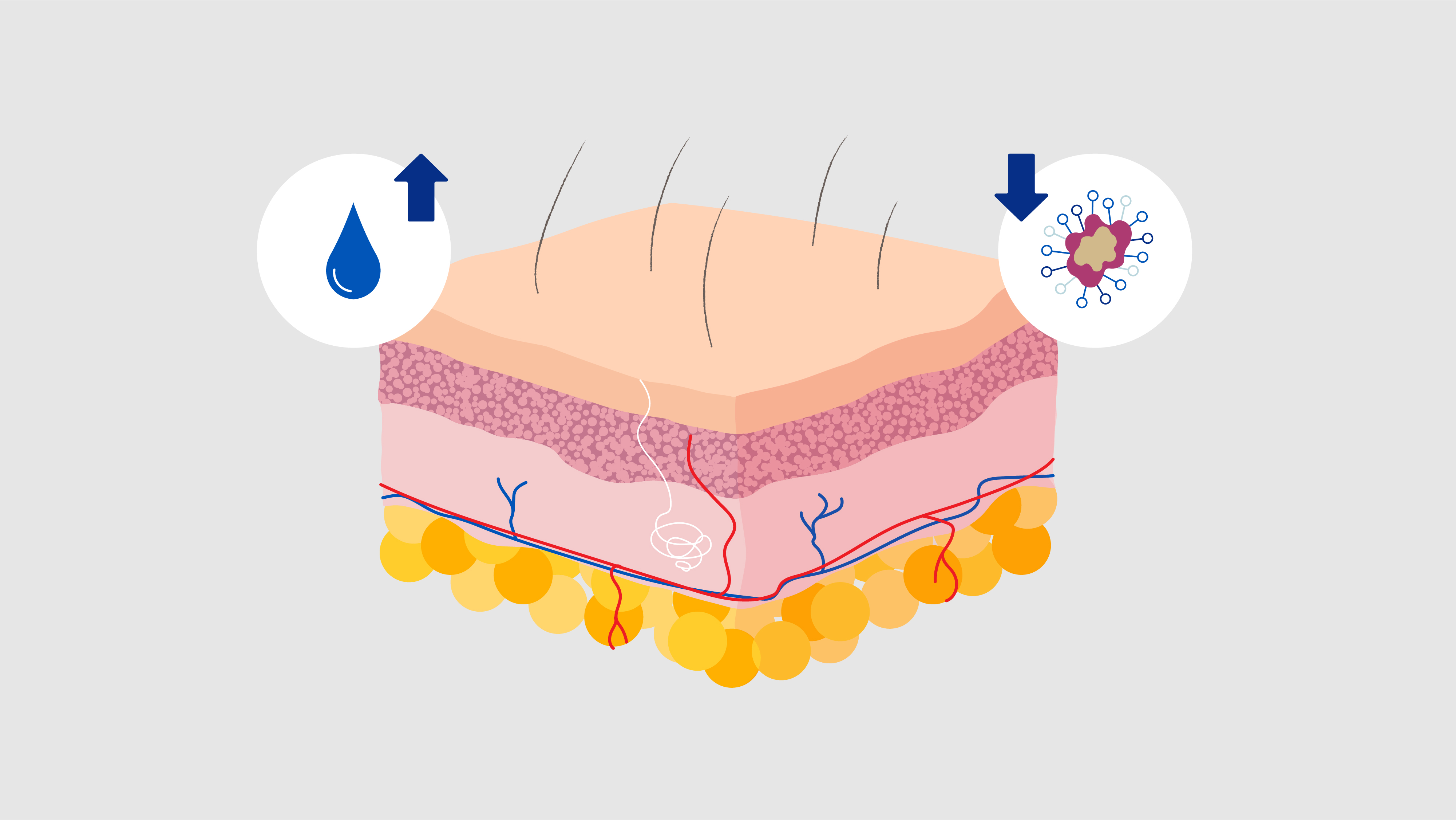 medline restore glove animation layered skin cross section illustration with icons